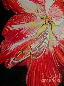 Prismacolor Amaryllis by Brigitte Emme
