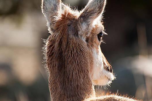 Pronghorn Eye by Bruce Gourley