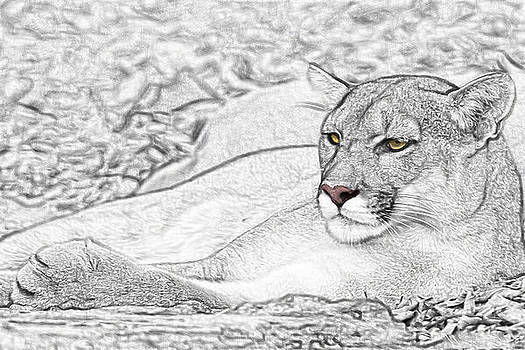 Puma  by Paul Pascal