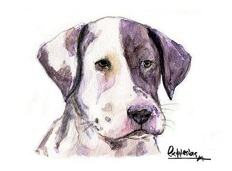 Puppy Dalmata by David Iglesias
