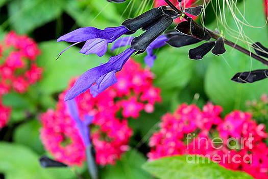 Purple Flower by Jay Nodianos