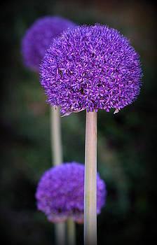 Purple by Khristi Jacobs