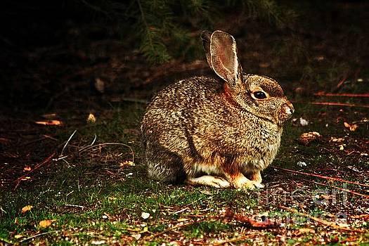 Rabbit  by Marjorie Imbeau