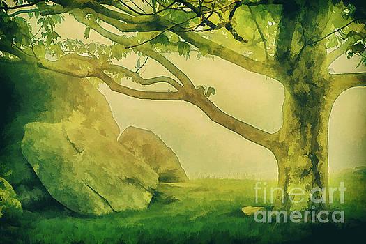 Radiant Forest - Blue Ridge Parkway by Dan Carmichael