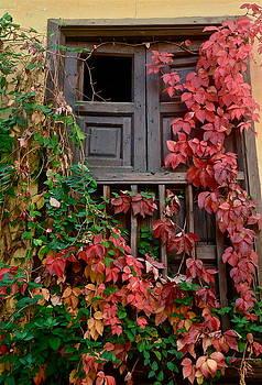 Red Beauty by Dorota Nowak