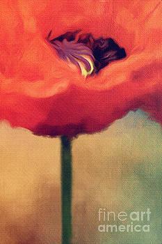 Red Poppy by Rosie Nixon
