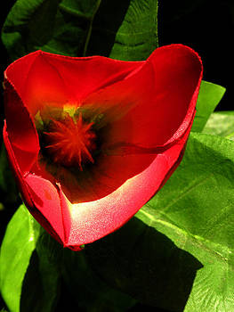 Red Tropical Flower by Robert Lozen