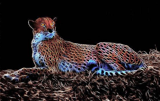 Resting Cheetah by Steve Barge