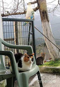 Resting ona chair by Paraskevas Momos
