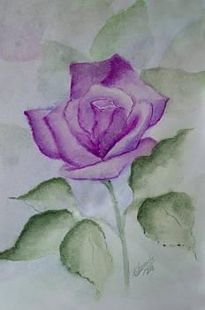 Rose 3 by Nancy Edwards