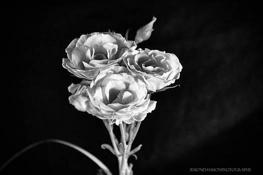 Roses in the Light by Rhonda DePalma