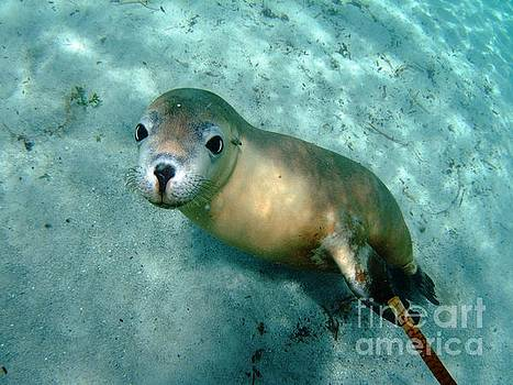 Sea lion on the seafloor by Crystal Beckmann