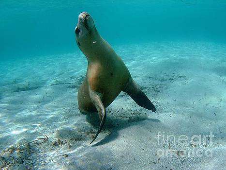 Sea Lion play time by Crystal Beckmann
