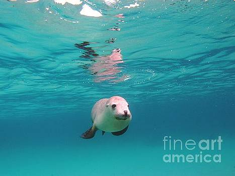 Sea lion reflection by Crystal Beckmann