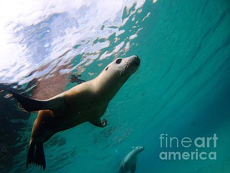 Sea lion under lights by Crystal Beckmann