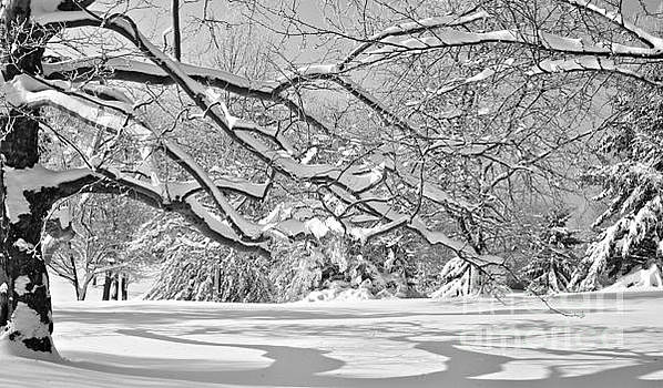 Shadows in the Snow II by Jay Nodianos