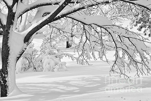 Shadows in the Snow by Jay Nodianos