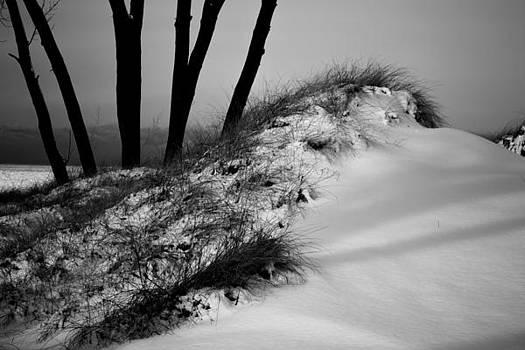 Snow on a Sand Dune by Steve Johnson