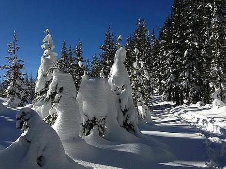 Snowy Oregon by Dorota Nowak