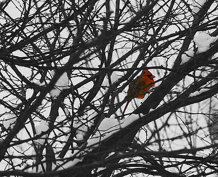 Solitude Cardinal by Karl Gebhardt