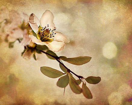 Spring Blossom by Suzanne Barber