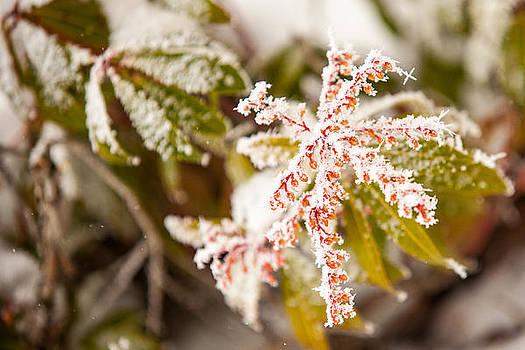 Spring Frost by Paul Bartoszek