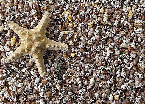 Starfish and seashells by Kiril Stanchev