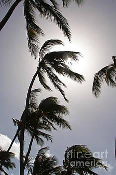 Sun Struck Palms by Alexandra Benson