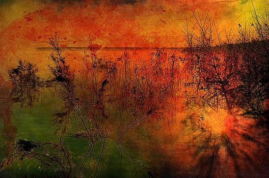 Sunrise Reflection by Steve Barge