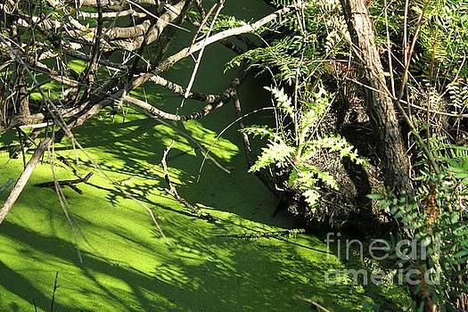 Swamp Things by Theresa Willingham