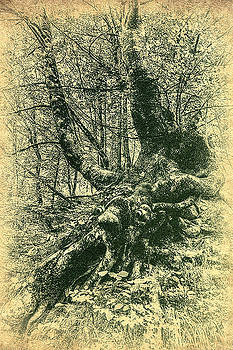 Sylvan - Tree Spirit by Vjekoslav Antic