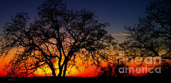 Tequila Sunrise by Cheryl Young