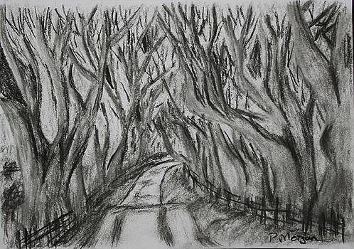 The Dark Hedges by Paul Morgan