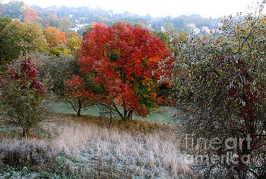 The First Frost by Jay Nodianos