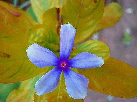 The Wonder Spring Flower On the Mountain  by Nikunj Vasoya
