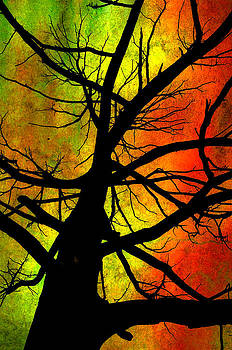 Tree and Color by Steve Barge