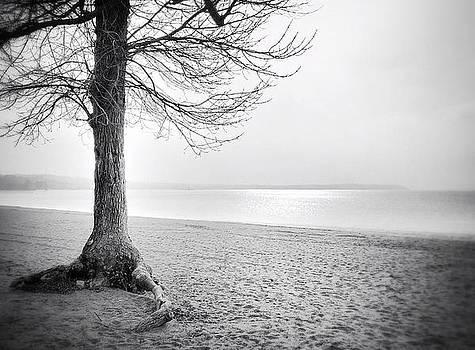 Tree of Life by Lisa  Esposito