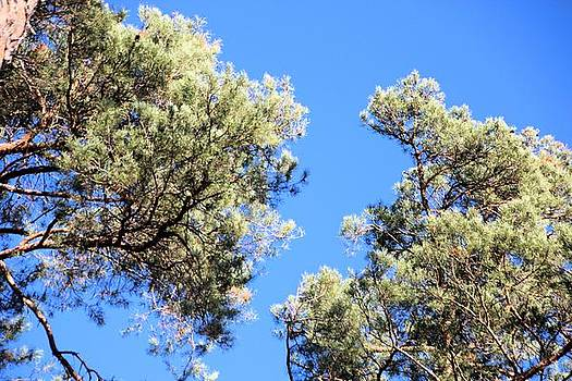 Tree tops by Gary Pavlosky