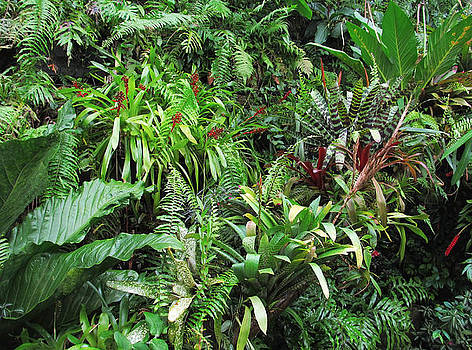 Tropical Forest Flora Background by Kiril Stanchev
