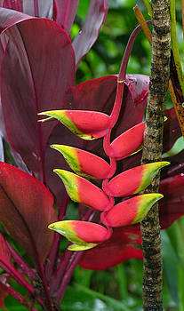 Tropical Plant by Robert Lozen