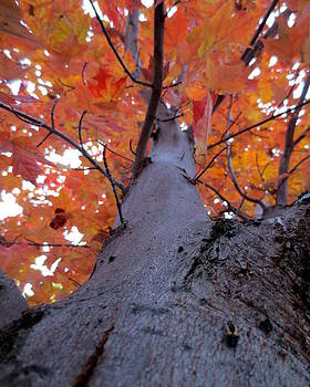 Under the Autumn Red Maple Tree by Brooke Finley