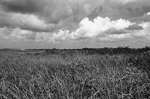 Vast Landscape by Andres LaBrada