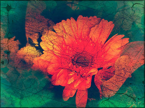 Vintage Aster by Sherry Flaker