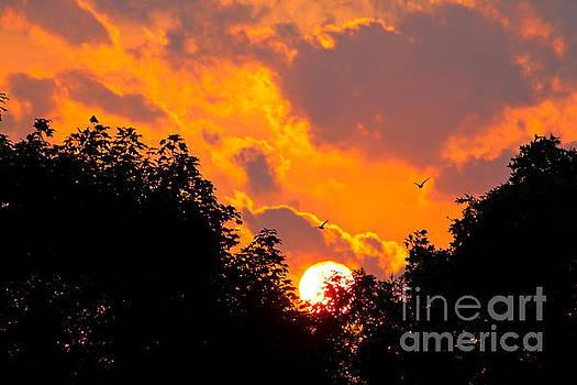Warm Summer Sunset by Jay Nodianos