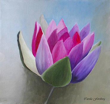 Waterlily by Carola Ann-Margret Forsberg
