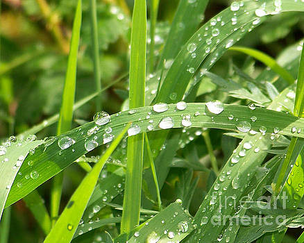 Wet Grass by Laurie Klein