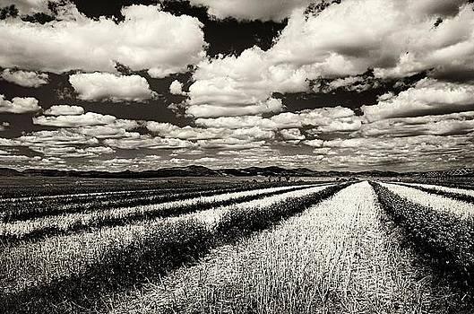 Where fields meet the sky by Steve Barge