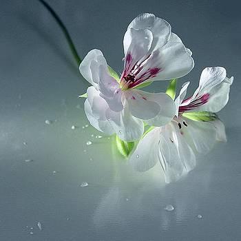 White Reflections by Ilona Stefan