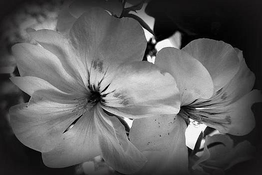 Wildflowers by Rose Szautner