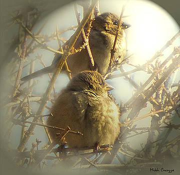 Winter Birds by Mikki Cucuzzo